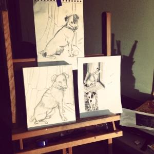 Terrier Study