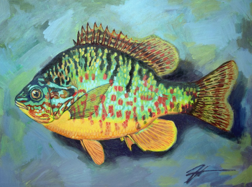 Lepomis gibbosus (Pumpkinseed Sunfish). Acrylic and ink on canvas. 12