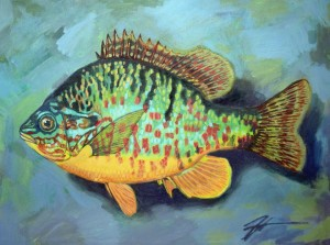 "Lepomis gibbosus (Pumpkinseed Sunfish). Acrylic and ink on canvas. 12"" x 16"""